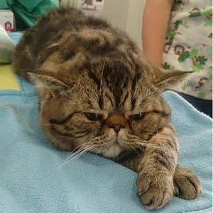 Cruz Verde centro veterinario en Morón de la Frontera consulta felina