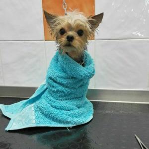 Cruz Verde centro veterinario en Morón de la Frontera peluquería canina