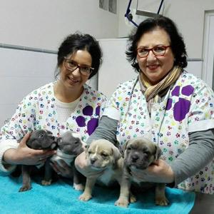 Cruz Verde centro veterinario en Morón de la Frontera veterinarias